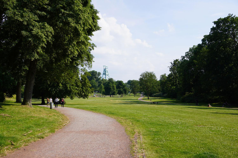 Welchen Effekt haben Grünflächen auf die Gesundheit der Stadtbevölkerung - eine von vielen Fragen des Urban Health digiSpace. Das Bild zeigt eine Grünfläche.